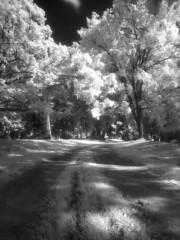 Oakwood Cemetery IR (scott_z28) Tags: blackandwhite bw film monument monochrome cemetery grave graveyard statue mi landscape ir minolta michigan surreal hc110 infrared epson vivitar v300 srt101 tricities efke saginaw 19mm f38 dilutionb ir820