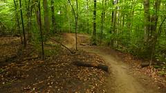Merrell Trail-