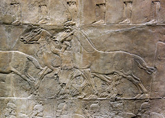Lion Hunts of Ashurbanipal, horses (profzucker) Tags: sculpture london art ancient iraq lion palace relief beginning britishmuseum gypsum tigris mosul hunt assyrian excavated ashurbanipal neoassyrian ninevah rassam 645bce