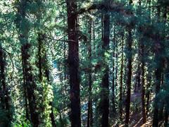 The woods (Carabanana) Tags: argentina libertad mendoza estatuas monumentos