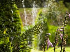 Wentworth - sep2013-2964 (Paul S Wheeler) Tags: plant flower fern water gardens wentworth natureplus canonpowershotsx50hs wentworthwalledgardens