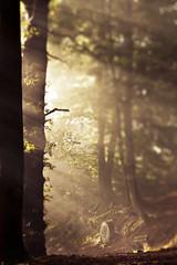 I don't often fake bokeh... (Herr Olsen) Tags: trees mist fog bench woods nebel bokeh fake bank wald solingen dunst mngsten klingenpfad