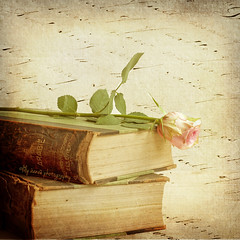 Old books and a rose - Explored # 11 (aenee) Tags: flower rose square textures encyclopedia antiquebooks fridayfinds winklerprins aenee dsc5056 creativemindsphotography highestpositioninexplore11 artistictreasurechest 11102013