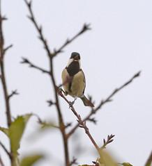 _DSC8360 (aeschylus18917) Tags: bird nature japan wildlife   200400mm  danielruyle aeschylus18917 danruyle druyle   nikkor200400mmf40gvr 200400mmf40gvr