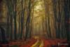 Golden Leaf Forest (larsvandegoor.com) Tags: road wood autumn trees holland fall nature leaves forest landscape path thenetherlands curved larsvandegoor