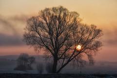 frostiger Sonnenaufgang (sonja_57) Tags: nebel natur landschaft sonne sonnenaufgang baum magicmoments colorsinourworld blinkagain bestofblinkwinners blinksuperstars