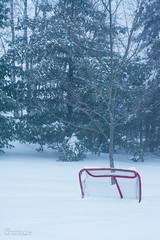 No Hockey today (JPM Lamontagne) Tags: winter snow cold tree hockey snowstorm oneday newbrunswick winterscene 2013 walktrees jpmlamontagne mcleodhill