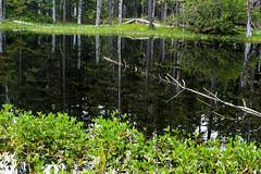 _MG_4010a (markbyzewski) Tags: alaska rainforest ugly glacierbaynationalpark muskeg