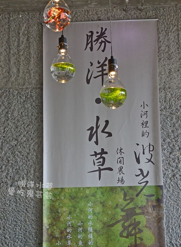 勝洋水草007.jpg