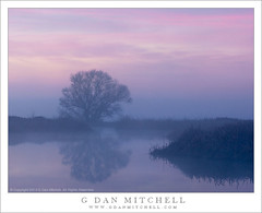 Tree and Fog, Dawn (G Dan Mitchell) Tags: california pink winter sky usa reflection tree nature fog clouds america print landscape dawn pond purple wildlife country north stock central merced surface national valley license wetlands marsh solitary sanjoaquin refuge tule