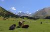 tien shan mountains kyrgyzstan (lercherl) Tags: kyrgyzstan kirgisien قيرغيزستان киргизия 吉爾吉斯斯坦 キルギスタン 키르기스스탄