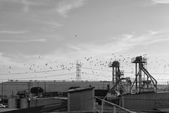 Industrial Migration (Kilroy714) Tags: plant abandoned rooftop industrial sony bif a7r