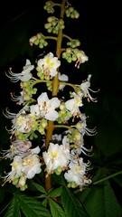macro tree nature night germany handy bestof nightshot... (Photo: eagle1effi on Flickr)
