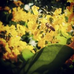 ดอกประดู่ ชื่อทางวิทยาศาสตร์ : Pterocarpus Indicus ดอกมีกลิ่นหอมหวาน อ่อนๆ ออกดอกช่วงเดือน พ.ค.- ส.ค.  คนไทยสมัยโบราณมีความเชื่อว่า หากบ้านใดปลูกดอกประดู่ไว้ที่บ้าน จะเป็นสิริมงคลทำให้เกิดพลังที่ยิ่งใหญ่ เพราะ ประดู่ หมายถึง ความพร้อม ความสมัครสมานสามัคคี