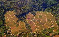 Aerial View of Forest and Vineyards - Kernen-Stetten - Metropolitan Area Stuttgart (Batikart) Tags: travel trees vacation brown holiday green nature colors lines yellow rural forest canon germany landscape geotagged deutschland countryside spring holidays europa europe quilt natural mosaic patterns urlaub curves natur flight felder aerialview fromabove vineyards april fields agriculture patchwork ursula landschaft wald bume muster stetten vacanze