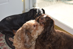 Group Hug (Tobyotter) Tags: dog chien frank hound canine dachshund perro hund link dackel teckel jimmydean doxie