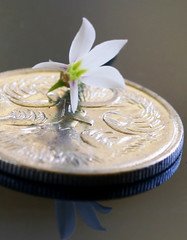 Macro Mondays: Smaller Than A Coin - Smelling the Flowers (Fiona Dawkins) Tags: 5cents macromondays smallerthanacoin
