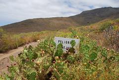 """PELiGRO BEJAS"" (FARA BIN) (perengb) Tags: travel vacation cactus spain tenerife teneriffa teneriffe adeje peligrobejas"