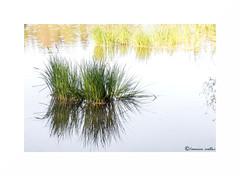 Pastel reflection (francine koeller) Tags: reflection water pool eau reflet wa etang