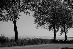 IMG_7018 (n_kot) Tags: bw blackwhite spring poland wiosna krajobraz la widnica dolnolskie wojewdztwodolnolskie dolnolskie gminamarcinowice la widnica