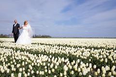 Trouwfoto tulpenveld Lelystad