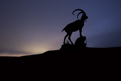 Siberian Ibex at dusk (James Allinson) Tags: silhouette landscape photography long exposure astrophotography siberian ibex