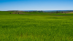 Anchos campos, larga vida (Jesus_l) Tags: espaa europa valladolid mucientes camposdecastilla jessl