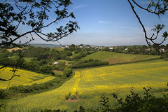Near springs end (Ollie_57.. on/off) Tags: uk england nature june rural canon landscape countryside spring flora view scenic devon 7d fields crops hdr rapeseed 2016 ef24105mm stokeinteignhead ollie57 affinityphoto