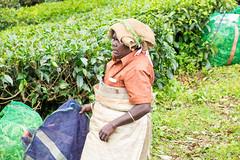 She works hard for her money (Roy Prasad) Tags: travel india workers tea harvest kerala hills prasad devan munnar kannan kannandevanhills royprasad
