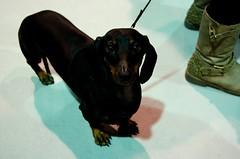 Mercazoco Noviembre Gijón Feria de Muestras mascotas