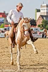 Pintos_Equitana_2016-0576 (tokerpress) Tags: messe pferde shou pintos tokerpress alexandertoker equitanaopenair ctokerpress2016 gestütgoldenepintos