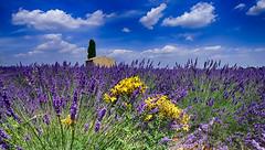 Dans les champs........... (Malain17) Tags: sky france colors clouds landscape photography pentax perspective photographers provence paysage lavande cabanon valensole