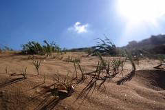 Ramla Bay - Gozo Malta 2016 (ErKi1998) Tags: sea plants sun beach strand bay sand meer mediterranean pflanzen malta gozo ramla 2016 mittelmeer sprachcaffe