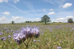 Auf dem Lande (mellane.karin) Tags: field landscape feld landschaft entringen breitenholz ammertal