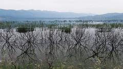 Lake Dojran (cuckove) Tags: trees panorama lake landscape flood olympus macedonia shore flooded lakescape dojran cuckove