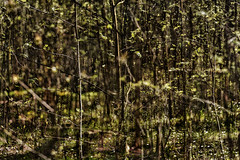 Multiple Nature 334 (pni) Tags: light tree suomi finland leaf helsinki branch centralpark multipleexposure helsingfors tripleexposure multiexposure keskuspuisto skrubu pni centralparken pekkanikrus