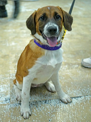 Dilly_01 (AbbyB.) Tags: dog pet animal newjersey canine doggy shelter shelterpet petphotography easthanovernj mtpleasantanimalshelter