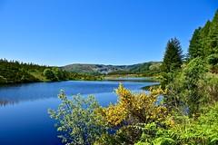 Lochan Reidthe (billmac_sco) Tags: trees water scotland trossachs lochan