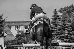 Rana dalmatina (feldweg) Tags: horse cheval jump jumping s riding pferd horseback turnier reiten hest horsejumping kon horseride 2016 springen springfrosch sspringen springreiten dersekow