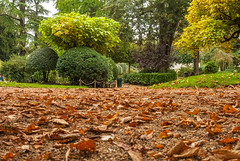 Les Feuilles Mortes (FotoMemi) Tags: autumn trees digital nikon scenery dordogne autumnleaves d200 nikkor perigueux dx aquitaine nikondx nikor nikond200