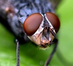 Macro (Gordon Marino) Tags: macro sigma105mm insect
