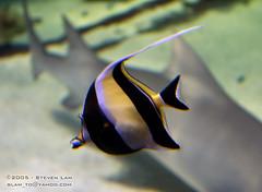 DSC_8401 (slamto) Tags: australia sydneyaquarium sydneysealifeaquarium fish