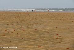 Mandarmani, West Bengal, India (Debarati Bhattacharjee) Tags: seashore mandarmani india westbengal landscape nature crab redcrab ocean sea bayofbengal colour