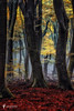 A Forest Torch (larsvandegoor.com) Tags: wood trees red art nature yellow forest landscape fine fairy magical enchanted