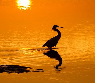 wading through sunrise