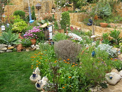 Im Garten 006 (wilhelm.haardt) Tags: antjes blumen peniscola imgarten antjesblumenpracht