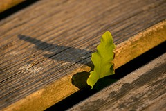 Green leaf (Ben De La Rosa) Tags: macro bokeh textures shape goldenlight kenko12mmextensiontube nikond3300
