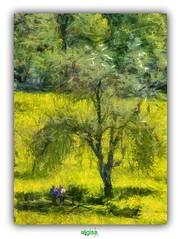 SITE NATUREL DEPARTEMENTAL MARGUERITE YOURCENAR au MONT NOIR (rgisa) Tags: park garden site noir jardin arbre mont parc yourcenar saintjanscappel