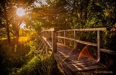 gotta have sun flare in this game (skeem125) Tags: bridges foilage grass sun sunflares goldenhour landscape serene creative lights green path trees wood sunset