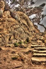 Coastal Stairway (gregnutterocc) Tags: pointlobos stairs steps carmel carmelca